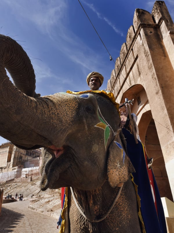 Elephant ride Jaipur
