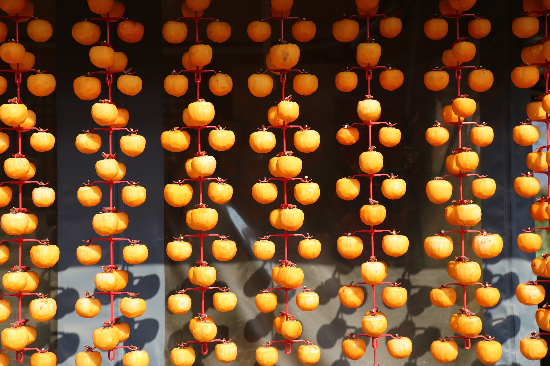 Dried persimmon at Hahoe folk village